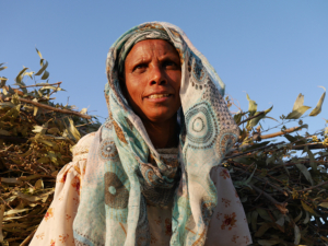 Ethiopia_klesper_alem_katema